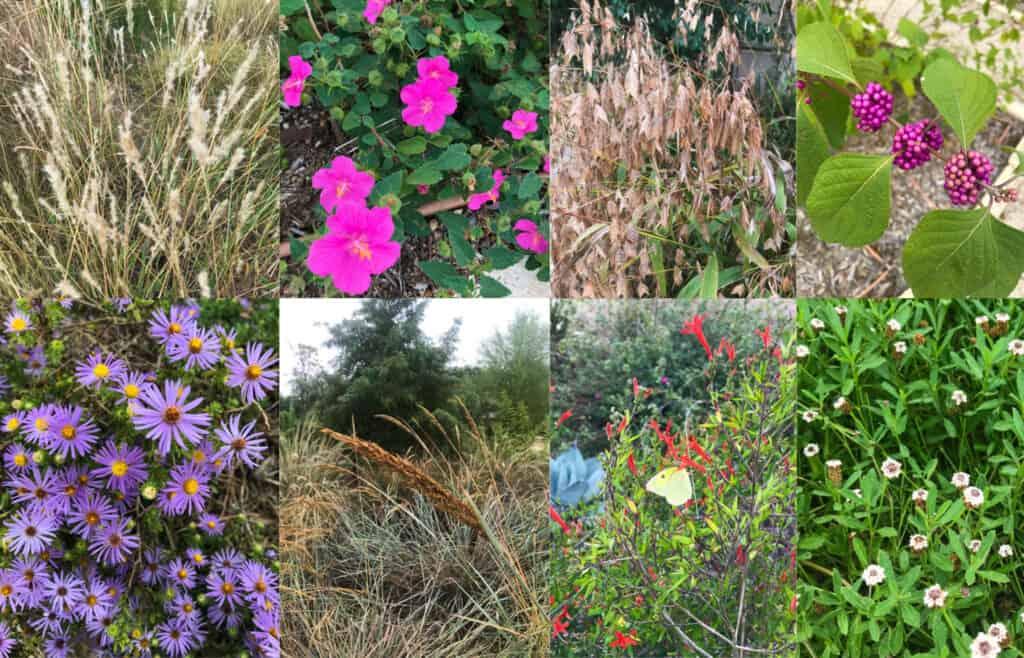 Plants from native backyards