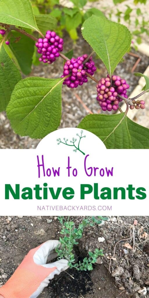 How to start growing native plants in your yard