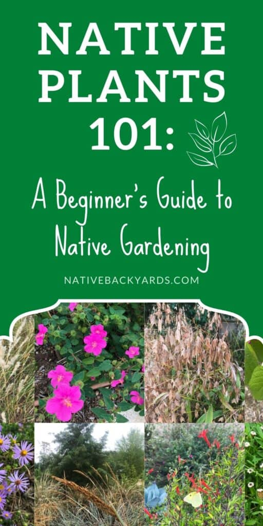 A beginner's guide to learning about native plants and native gardening