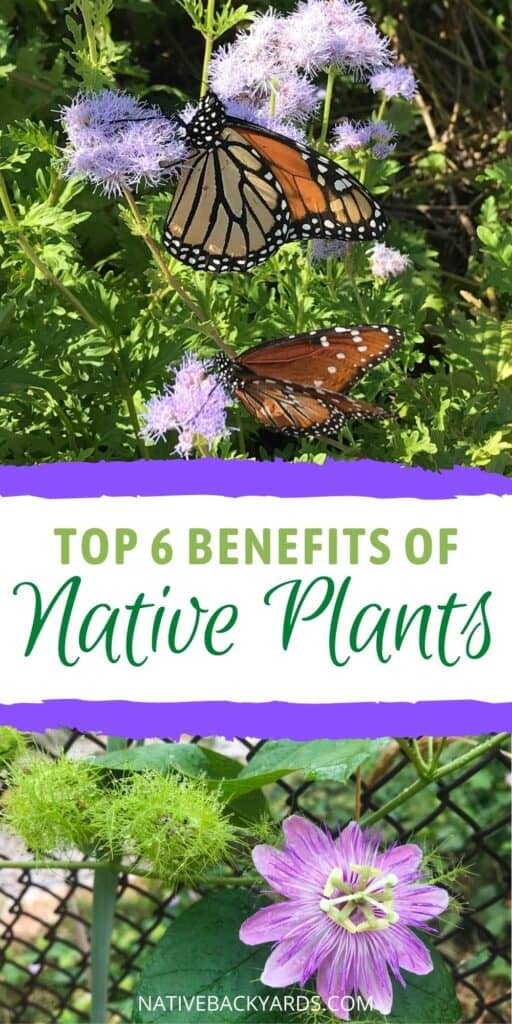 Check out these top 6 reasons you should be using native plants in your yard and garden!
