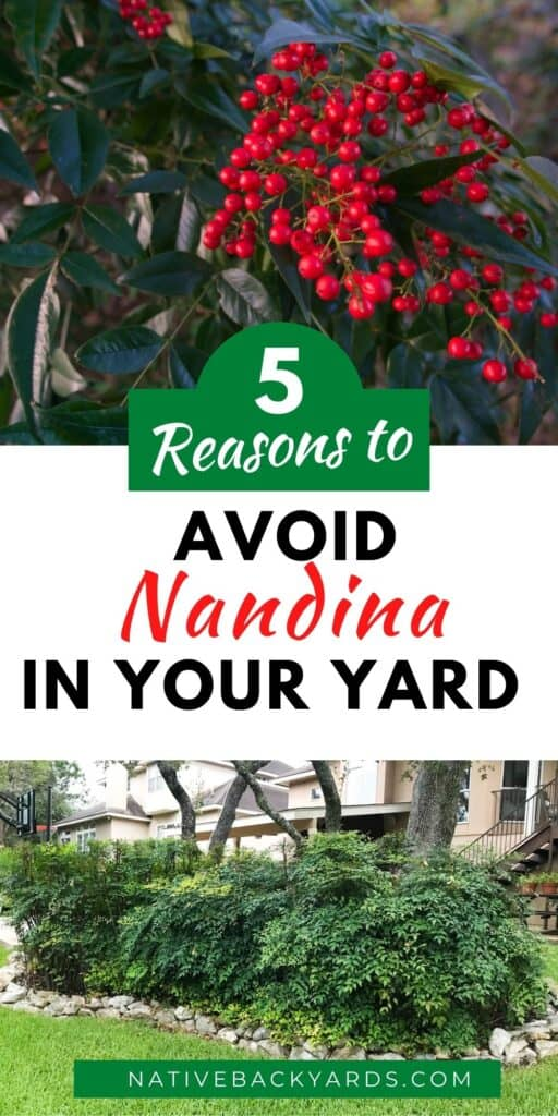5 Reason to Avoid Nandina in Your Yard