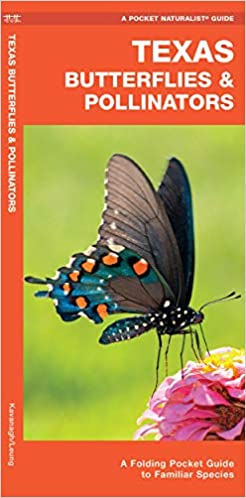 Texas Butterfly Identification Guide