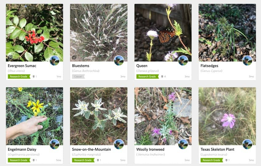 Plant observations by user haeleyg on iNaturalist.org.