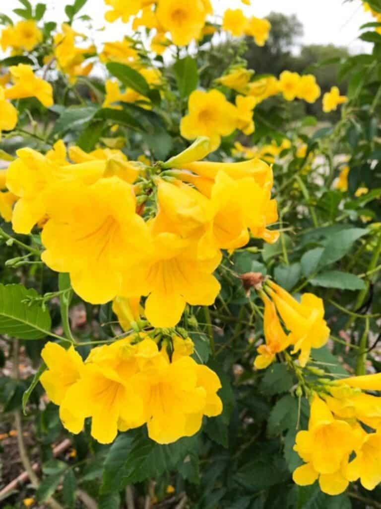 Esperanza San Antonio Native Plants