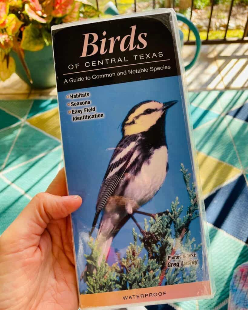 A golden cheeked warbler on the cover of a Central Texas Bird Guide.