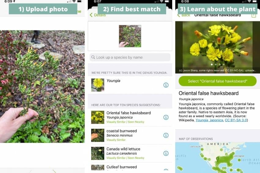 How to use iNaturalist, a plant identification app