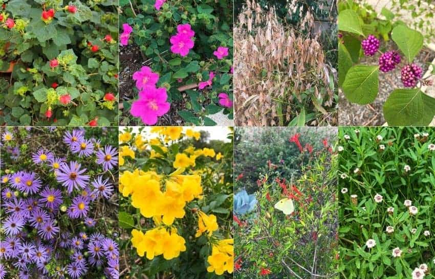 Native plants of San Antonio TX
