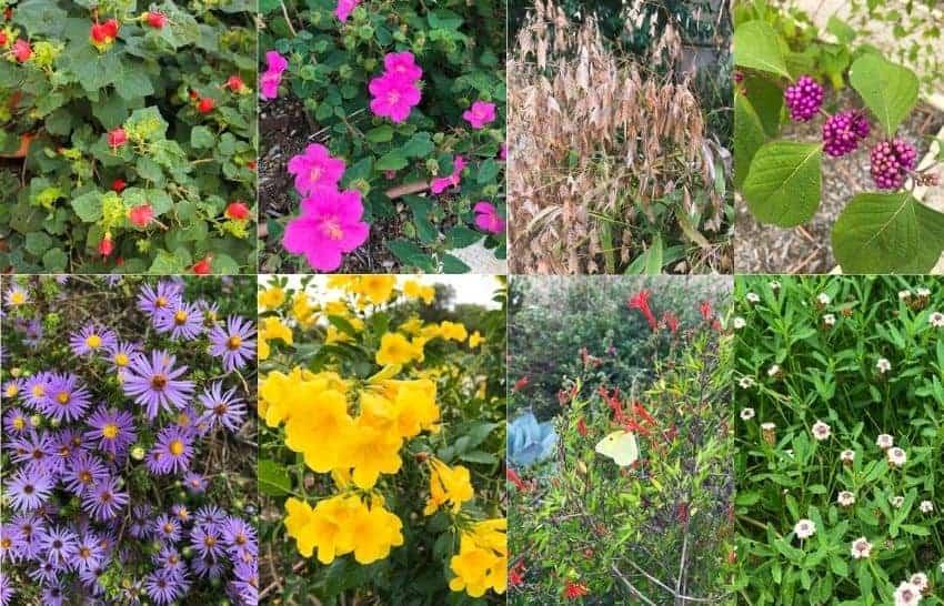 Top Texas native plants