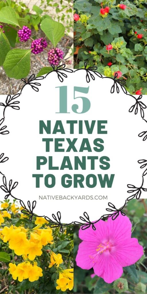 These 15 native Texas plants are not only beautiful they are easy to grow and help the environment!