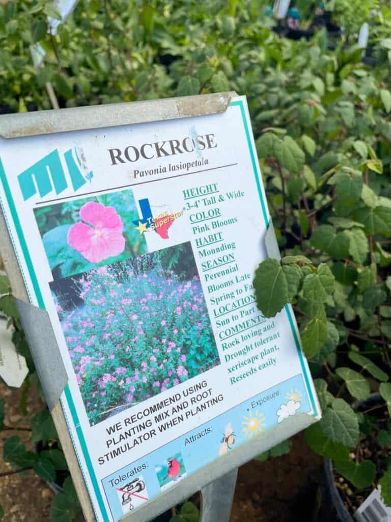 Where To Buy San Antonio Native Plants