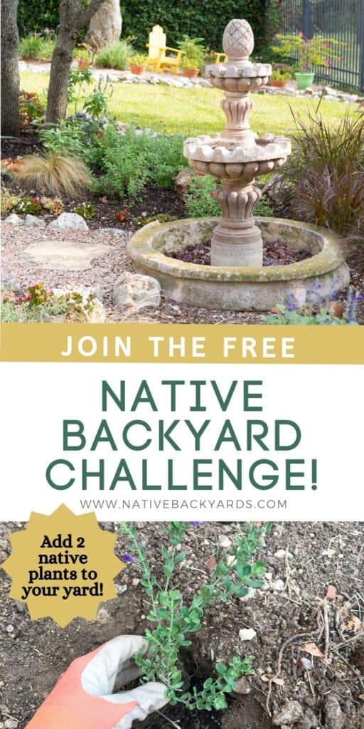 Join the Native Backyard Challenge - a free four-week email challenge starting May 1st. You'll learn about growing native plants with the ultimate goal of adding two native plants to your yard or garden!