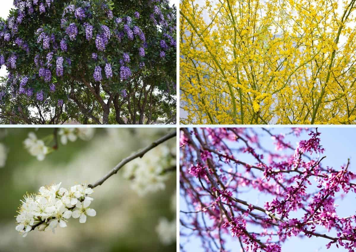5 Native Flowering Trees of Texas Hill Country