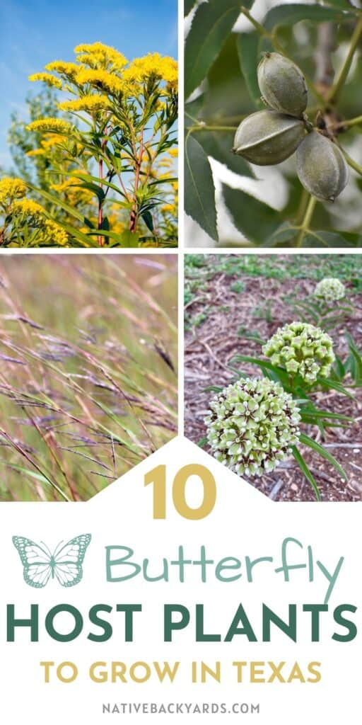 Help save declining butterfly and moth populations by planting more of their host plants in your yard! Here are 10 great host plants to grow in Texas (and much of the US)!