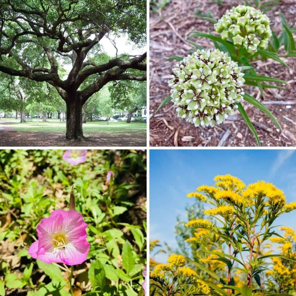 Top butterfly host plants to grow in Texas (and much of the United States).