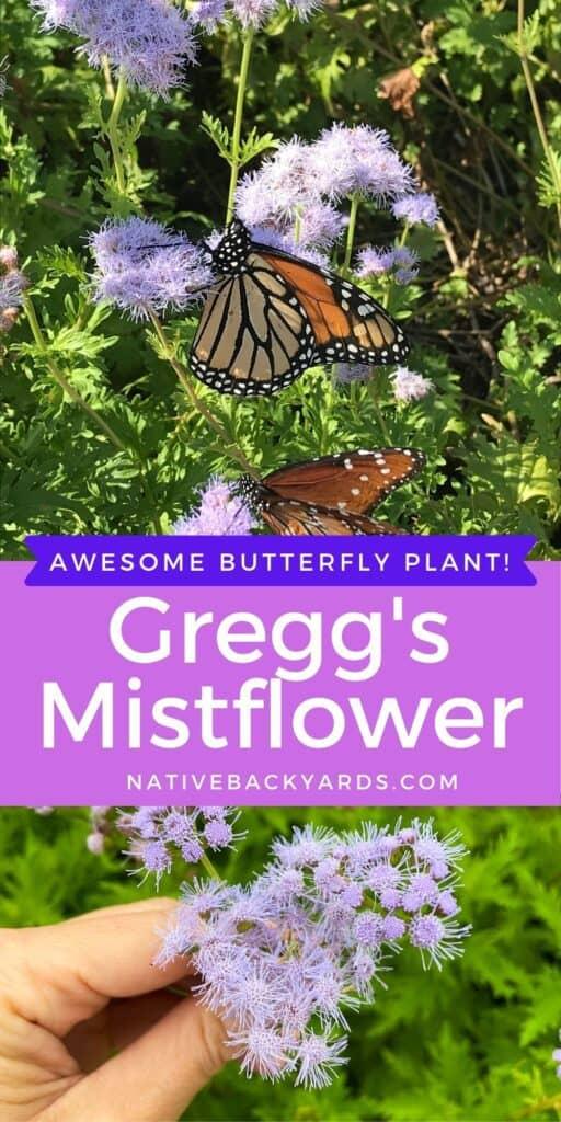 Greggs Mistflower with monarch butterfly