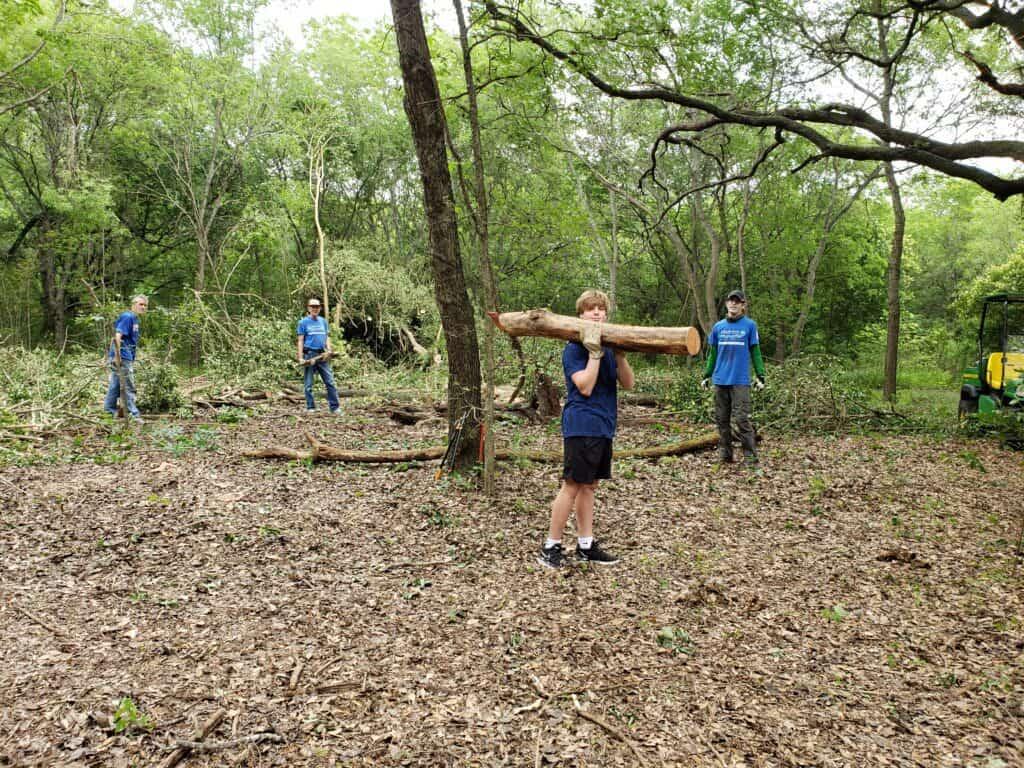 Cutting down privet trees.