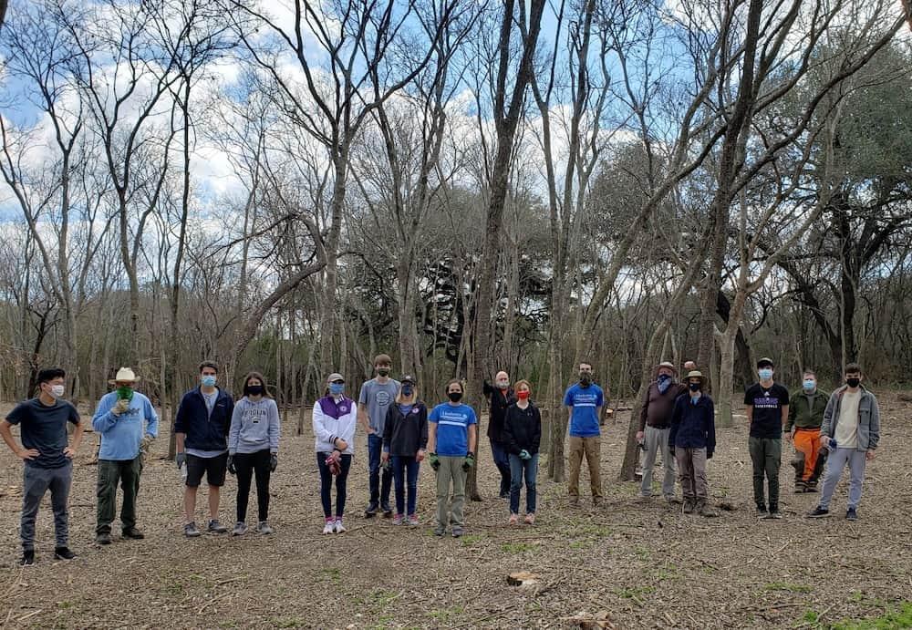 Volunteers removing invasive ligustrum / privet trees.